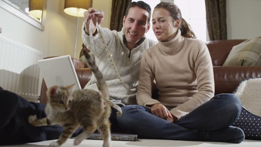 sutterstock casal brincando gato